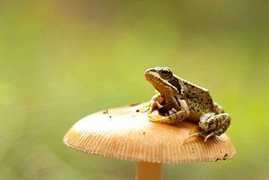 Kikker op een paddenstoel op de uitkijk