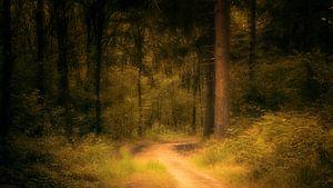 Märchenwald #3 von