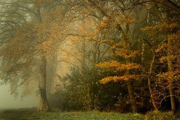 Schilderachtig herfstbos in de mist