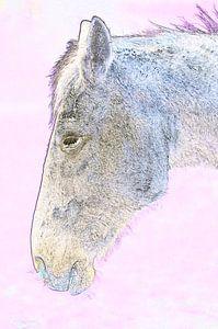Weißes Pferd in Rosa