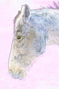 Weißes Pferd in Rosa von De Rover
