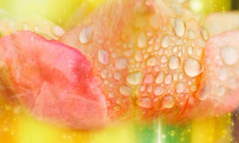 natte kleuren van Ribbi The Artist