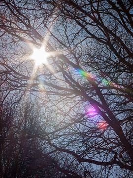 Lente zon van Teun Donders
