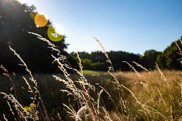 Limburgse heuvel landschap met prachtige zonnestraal reflectie van