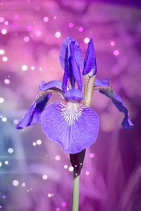 Metafysische Iris van