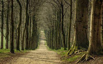 Ein Spaziergang auf dem Anwesen Mariëndaal von Tim Abeln