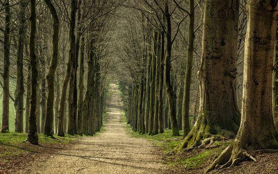 Een wandeling op landgoed Mariëndaal
