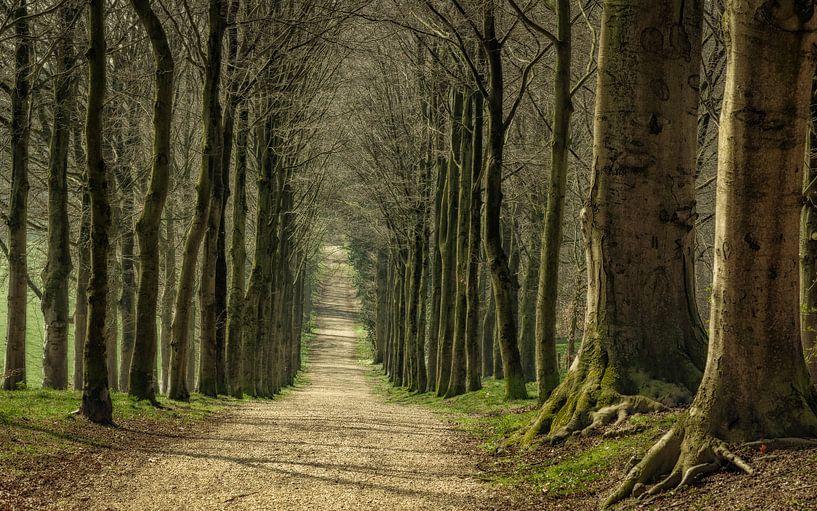 Een wandeling op landgoed Mariëndaal van Tim Abeln