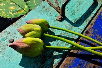 Lotus bloemen Trinity van Michael Klinkhamer