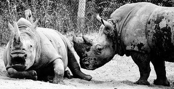 rhino van melissa demeunier