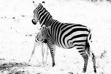 Zebra met jong van Tom van de Water
