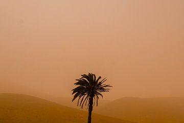 Palme in orangefarbener Landschaft - Calima von Linda Bouritius