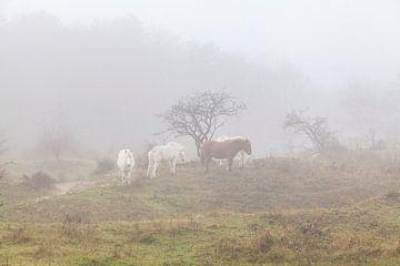 Paarden in de mist von Nel Diepstraten