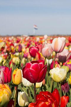 Tulpen en de Nederlandse vlag in bollenveld van Selina de Bue