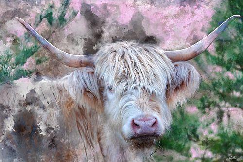 Aquarel blonde Schotse Hooglander koe