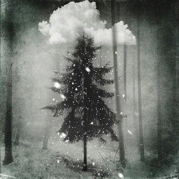 Tanne im Schnee von Dirk Wüstenhagen