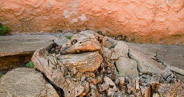 'Schildpad' van Erna Kampman