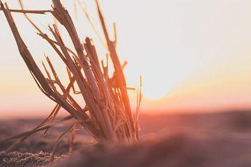 Sonnenuntergang am Strand mit Zweigen. von Ben Hoedt