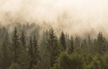 Ochtendmist boven het woud van Mindy Molein
