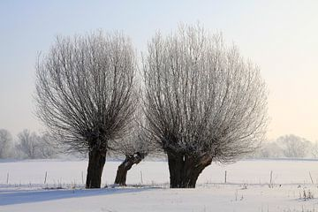 Kopfweiden im Winter von Karina Baumgart
