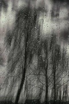 Berken in een storm van Christine Nöhmeier