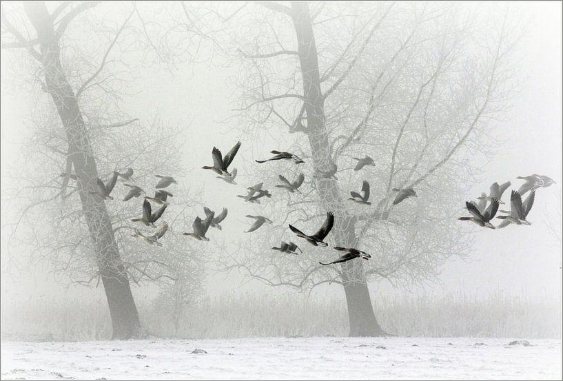 geese in winter....  van Els Fonteine