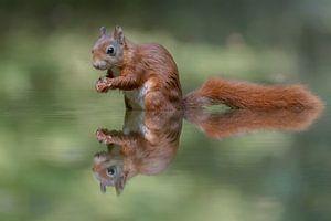 Weerspiegeling van een eekhoorn