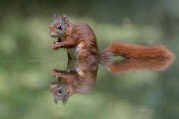 Weerspiegeling van een eekhoorn van Albert Beukhof