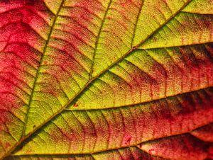 herfstblad van Marieke Funke