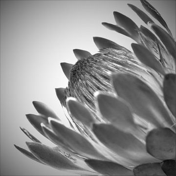 Inspirierende schwarze und weiße Blütenblätter von Hannelore