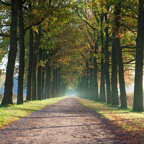Herfst van Harld Roling