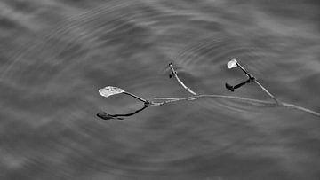 Zwemmend ijs van Marianne Ouwerkerk