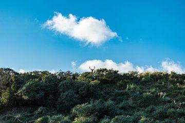 Een nieuwsgierig damhert op de top van een duin van Mandy Metz