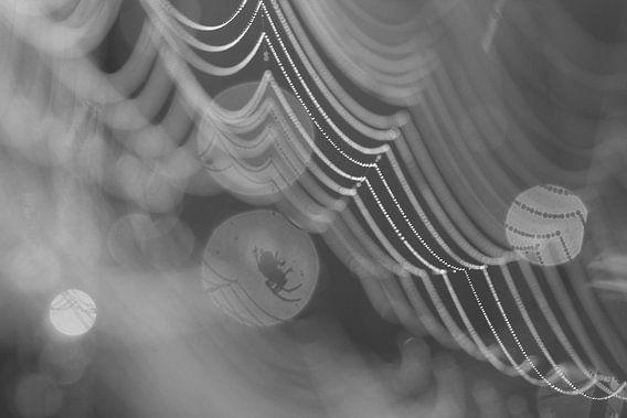 Griezelige spin in zijn web in zwart wit. van Astrid Brouwers