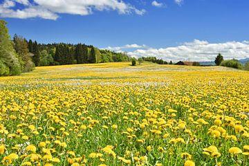 Frühling im Allgäu von Andreas Föll
