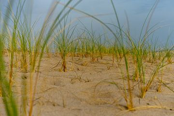 Sturzhelmgras auf dem Strand in der Abendsonne von Leo Luijten