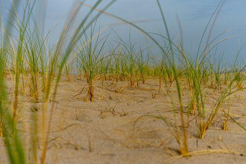 Helmgras op het strand in de avondzon van