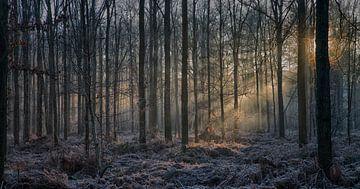 Zonlicht in het bos van Egon Zitter
