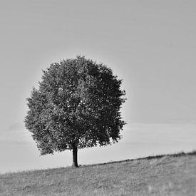Alleenstaande boom. van Berend Doornenbal