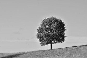 Alleenstaande boom. von Berend Doornenbal