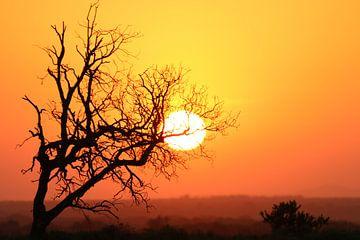 Sonnenuntergang Südafrika von