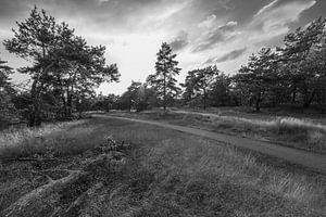 The Path van Jeroen Hagedoorn