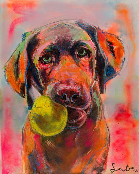 Labrador sur Liesbeth Serlie