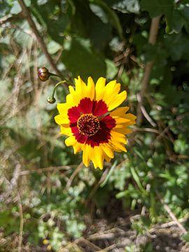 Goldene Blume kommt aus der Leinwand von Jacco Aalbers