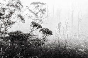 Regenwoud in de mist II