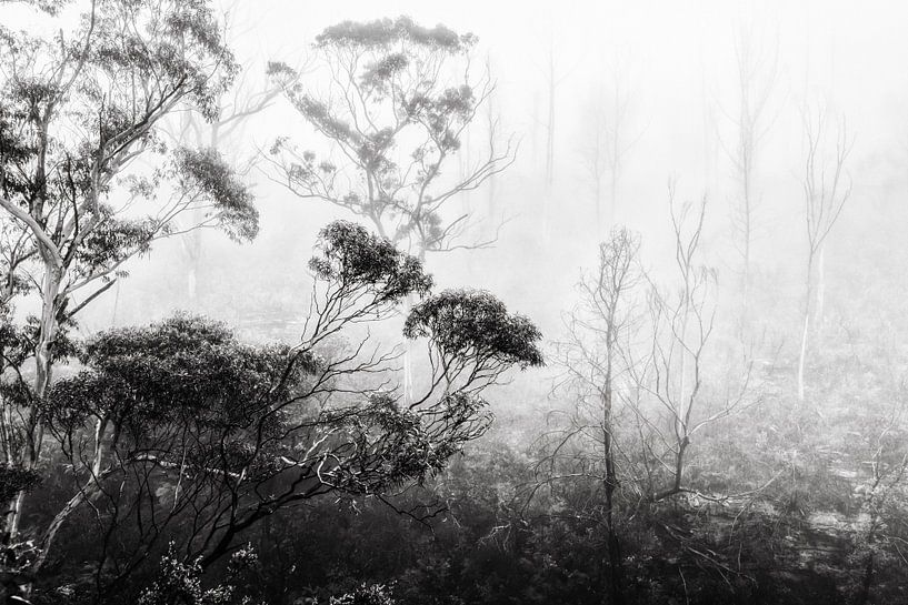 Regenwald im Nebel II von Ines van Megen-Thijssen