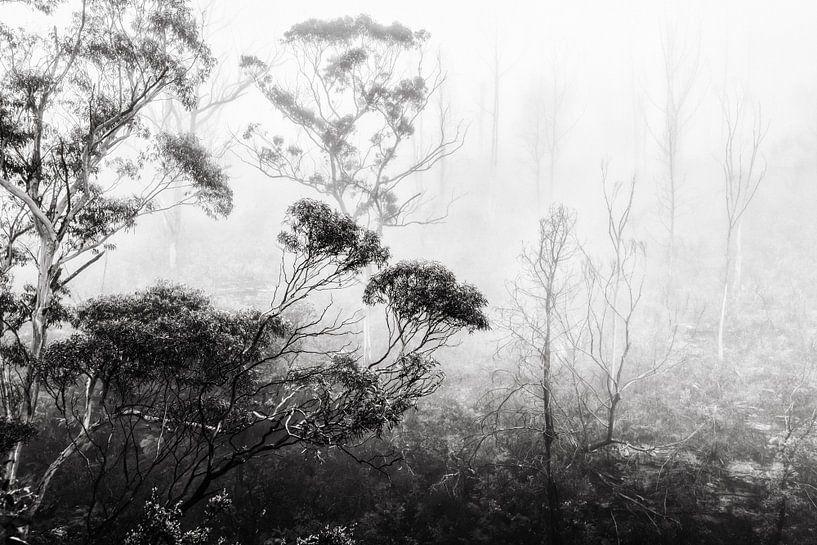 Regenwoud in de mist II van Ines van Megen-Thijssen