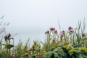 Blumen von Yvette van der Graaf