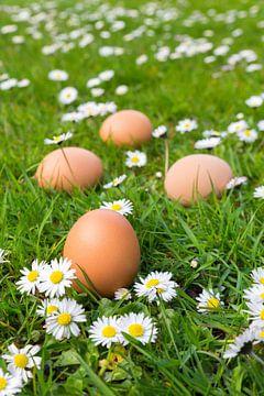Hühnereien im Gras mit blühenden Gänseblümchen während des Frühlinges von Ben Schonewille