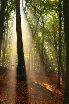 Magische Sonnenstrahlen im Herbst mit fallenden Blättern von Maarten Pietersma